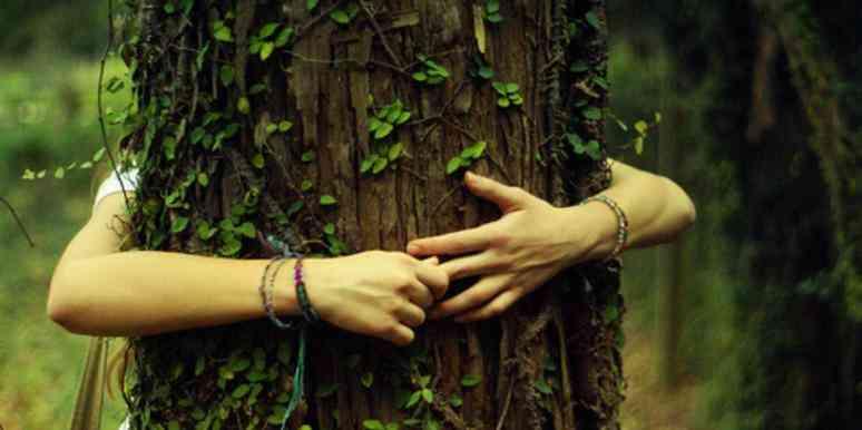 Биоэнергетические и волшебные свойства деревьев
