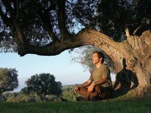Свойства деревьев