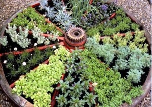 Пряные травы в саду и дома