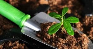 Как определить кислотность почвы без приборов