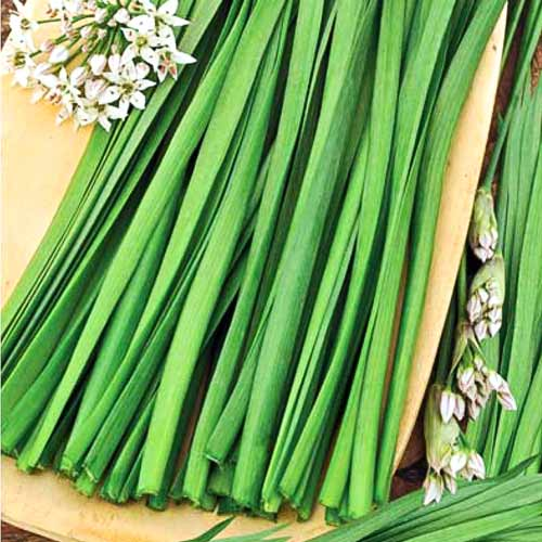 Купить семена, растение – Лук душистый Джусай (Allium ramosum)