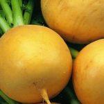Купить семена, растение – Репа Луна (Brassica rapa)