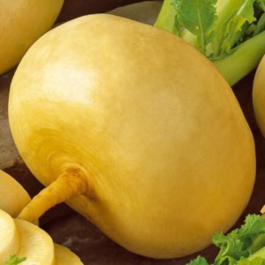 Купить семена, растение – Репа Петровская (Brassica rapa)