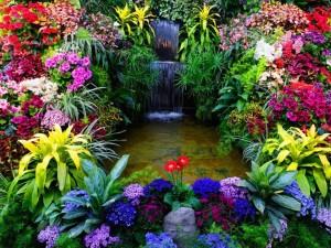 Латинские названия растений – учимся понимать