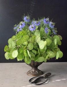 Купить семена, растение – Лунник оживающий (Lunaria rediviva)