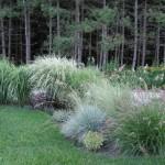 Купить семена, растение – Ковыль перистый (Stipa pennata)