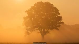 «Свет для растения — это нечто большее, чем визуальный сигнал, свет — это пища» (фото: Cosmo Condina/Alamy)
