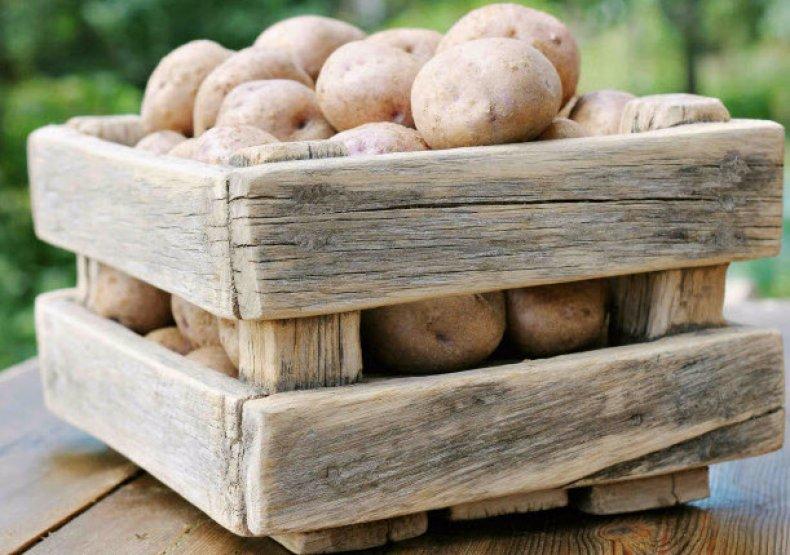 Чистый картофель на хранение – в подвал