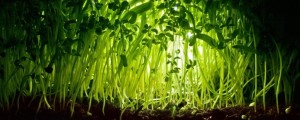 «Вам просто нужно заснять жизнь растения и ускорить — тогда оно будет вести себя как животное» (фото: Mycatkins CC by 2.0)