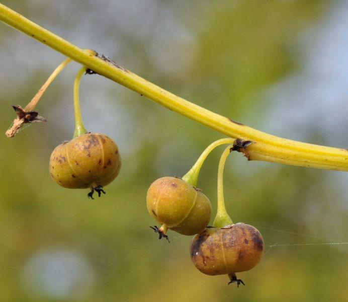 Новинки семян