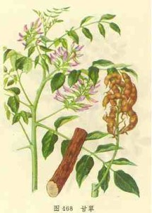 Купить семена, растение – Солодка уральская (Glycyrrhiza uralensis)