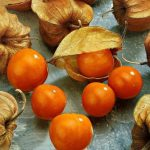 """Купить семена, растение – Физалис овощной """"Кондитер"""" (Physalis Konditer)"""