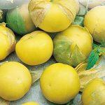 Купить семена, растение – Физалис Ананасовый