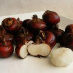 Купить семена, растение – Водяной каштан (Eleocharis dulcis)