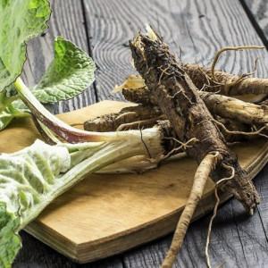 Купить семена, растение – Лопух овощной японский (Arctium lappa)