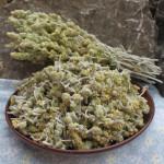 Купить семена, растение – Железница крымская (Sideritis taurica)