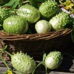 Купить семена, растение – Ангурия сирийская (Anguria Syrian)